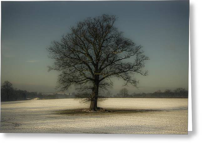 Snowy Scene Greeting Cards - Snowasis Greeting Card by Chris Fletcher