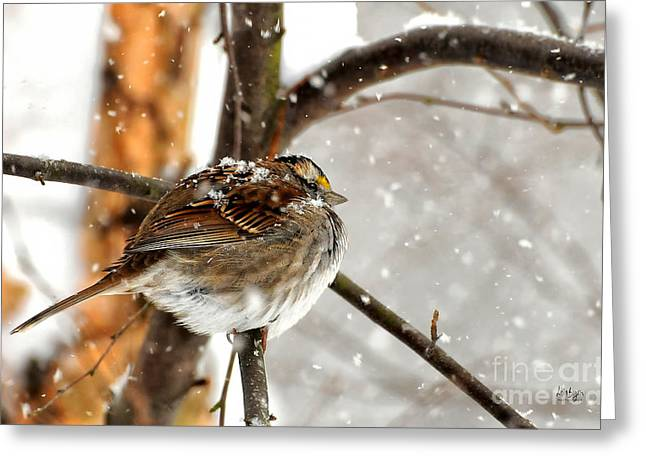 Birds In Snow Greeting Cards - Snowball Greeting Card by Lois Bryan