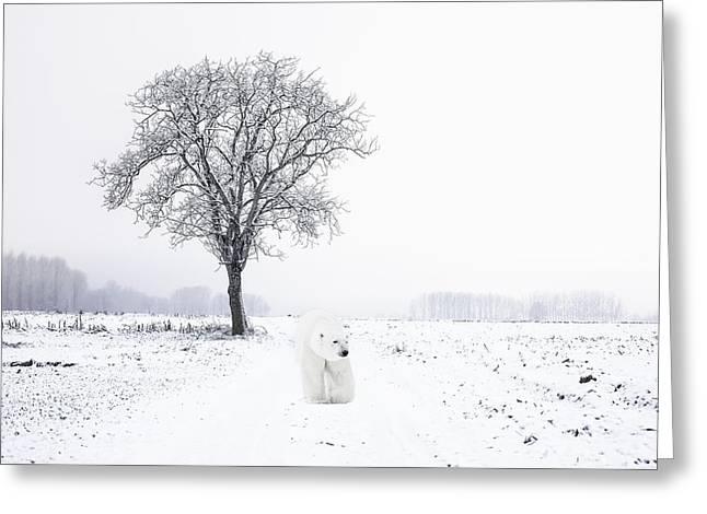 Lone Polar Bear Greeting Cards - Snowbird Greeting Card by Daniel Hagerman