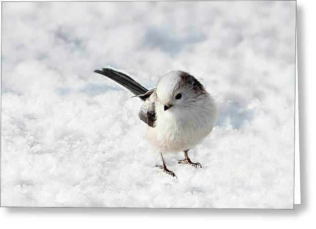 Small Canvas Greeting Cards - Snowbird Greeting Card by Heike Hultsch