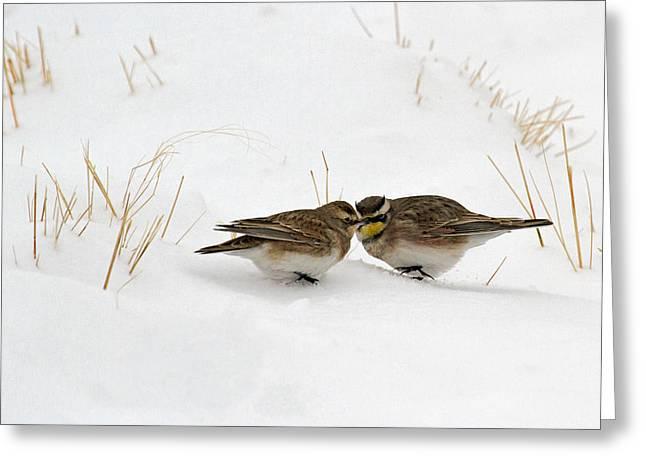 Horned Larks Greeting Cards - Snowbirds Greeting Card by Sandy Sisti