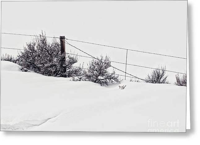 Drifting Snow Greeting Cards - Snowblind Greeting Card by Alison Sherrow