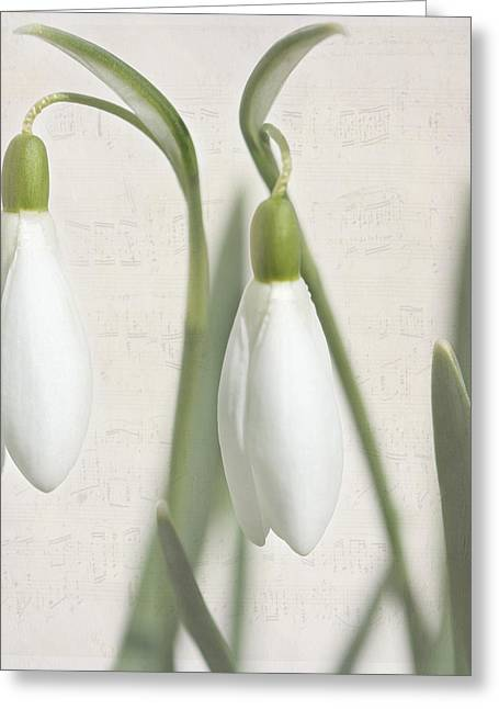 Snowdrops In Spring Greeting Card by Heike Hultsch