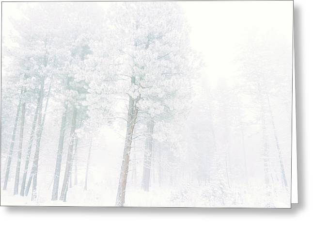 Snowed In Greeting Card by Tara Turner