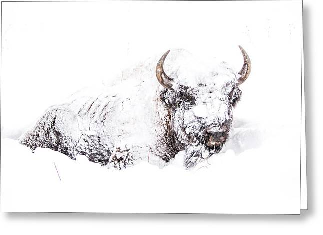 White Thick Fur Greeting Cards - Snowed-in Greeting Card by Thomas Szajner