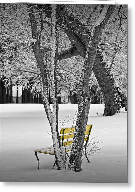 Snow Tree Prints Greeting Cards - Snowfall at Garfield Park with Yellow Park Bench No. 0963BW Greeting Card by Randall Nyhof