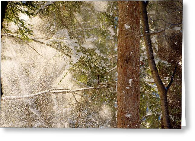 Snowy Day Greeting Cards - Snowfall Greeting Card by Tracy Winter