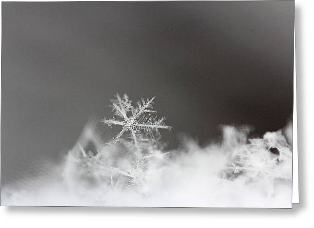 Becky Greeting Cards - Snowflake 1 Greeting Card by Becky Lodes