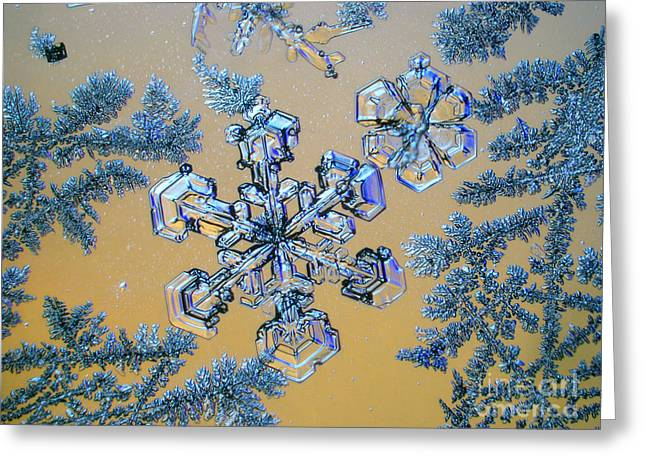 Light Microscopy Greeting Cards - Snowflake Greeting Card by Eye of Science