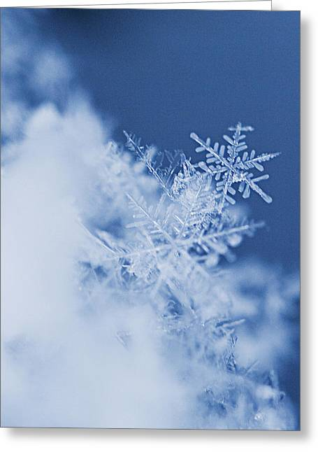 Snowflake Greeting Cards - Snowflakes 2 Greeting Card by Jeff Klingler