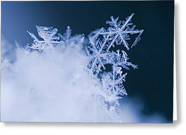 Snowflake Greeting Cards - Snowflakes 4 Greeting Card by Jeff Klingler