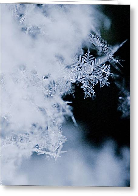 Snowflake Greeting Cards - Snowflakes 5 Greeting Card by Jeff Klingler