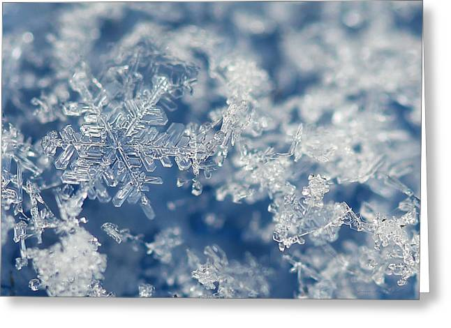 Light And Dark Greeting Cards - Snowflakes Blue Two Greeting Card by Jennie Marie Schell