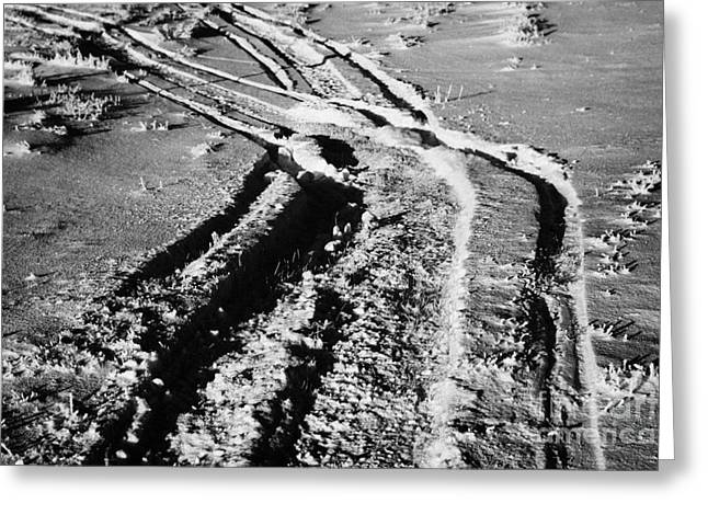 Harsh Conditions Photographs Greeting Cards - snowmobile tracks in snow across frozen field Canada Greeting Card by Joe Fox
