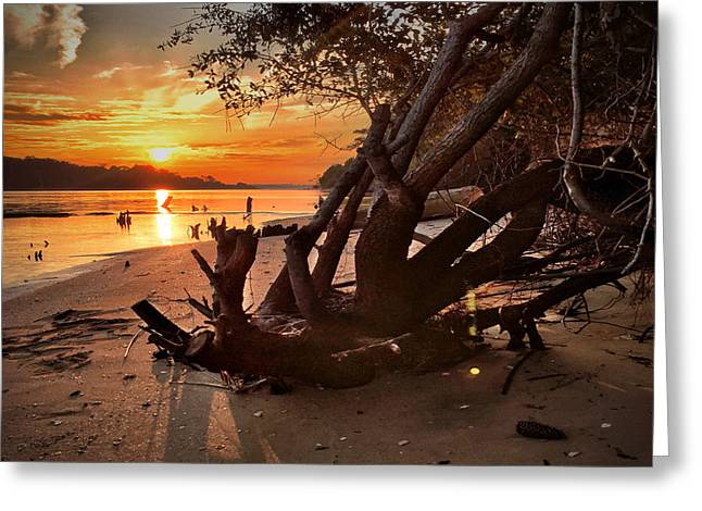 Sunset Greeting Cards Greeting Cards - Snows Cut Driftwood Sunset Greeting Card by Phil Mancuso