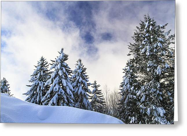 Superstorm Sandy Greeting Cards - Snowscape Greeting Card by Doug McPherson
