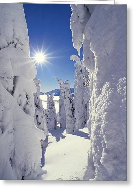 Snowy Day Greeting Cards - Snowscape Snow Covered Trees And Bright Sun Greeting Card by Anonymous