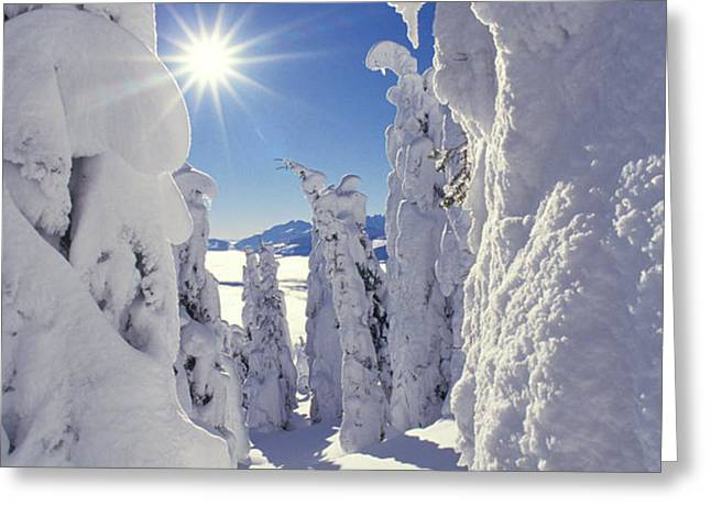 Snowscape Snow Covered Trees And Bright Sun Greeting Card by Anonymous