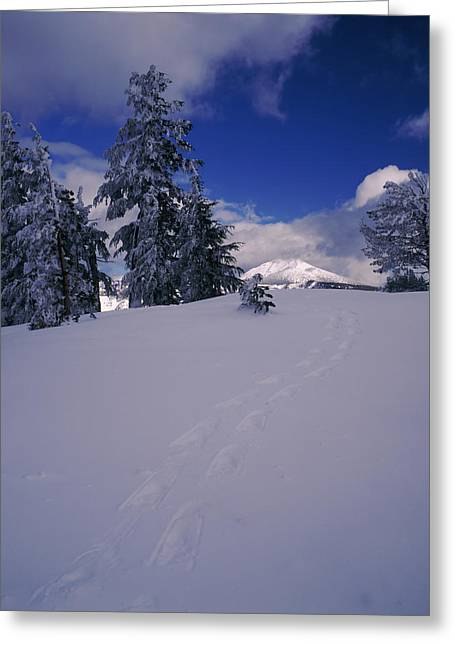Crater Lake National Park Greeting Cards - Snowshoe Tracks On Snow, Mt. Scott Greeting Card by Panoramic Images