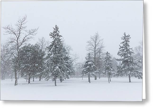 Snow-covered Landscape Greeting Cards - Snowstorm - Tall Trees and Whispering Snowflakes Greeting Card by Georgia Mizuleva