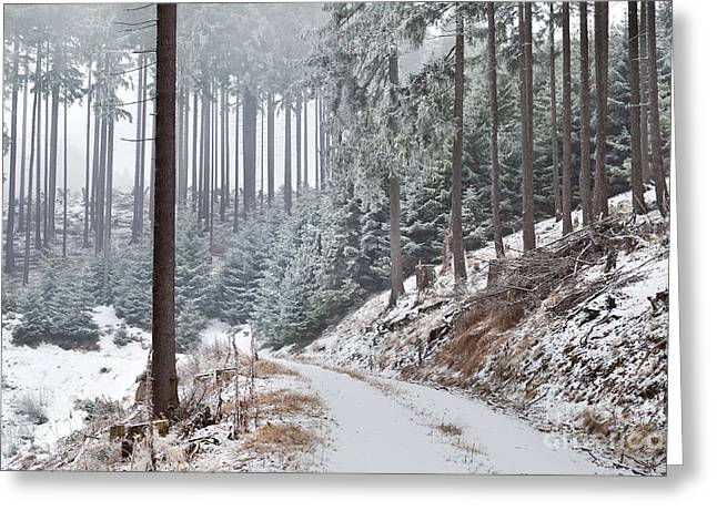 Snowstorm Greeting Cards - Snowstorm In Old Forest Greeting Card by Olha Rohulya