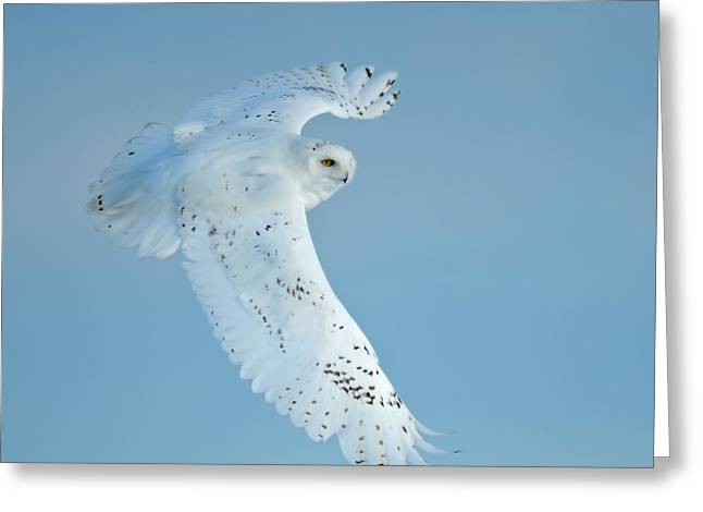 Courson Greeting Cards - Snowy Against Blue Sky Greeting Card by CR  Courson
