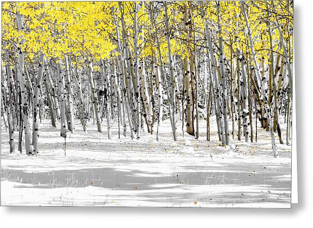 Cabin Wall Greeting Cards - Snowy Aspen Landscape Greeting Card by The Forests Edge Photography - Diane Sandoval