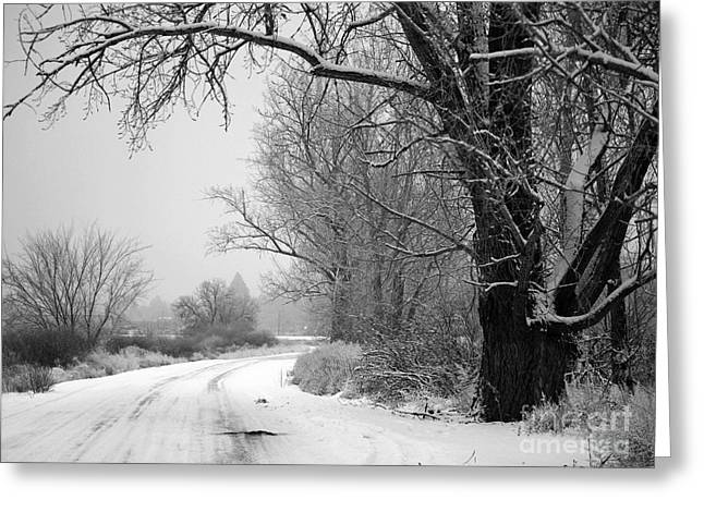 Old Country Roads Greeting Cards - Snowy Branch over Country Road - Black and White Greeting Card by Carol Groenen