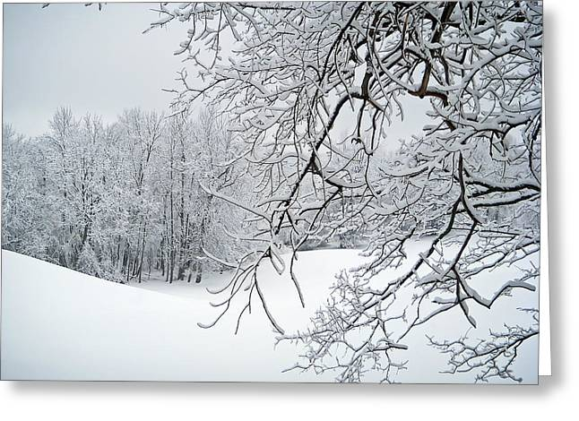 Snowy Branches Greeting Card by Aimee L Maher Photography and Art Visit ALMGallerydotcom