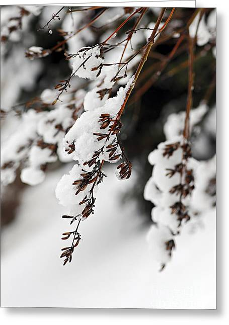 Winter Trees Greeting Cards - Snowy branches Greeting Card by Elena Elisseeva