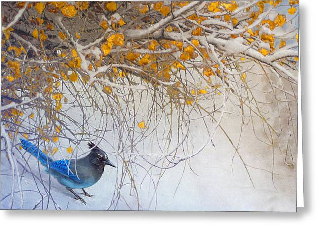 Snowy Branches Stellar Jay Greeting Card by R christopher Vest