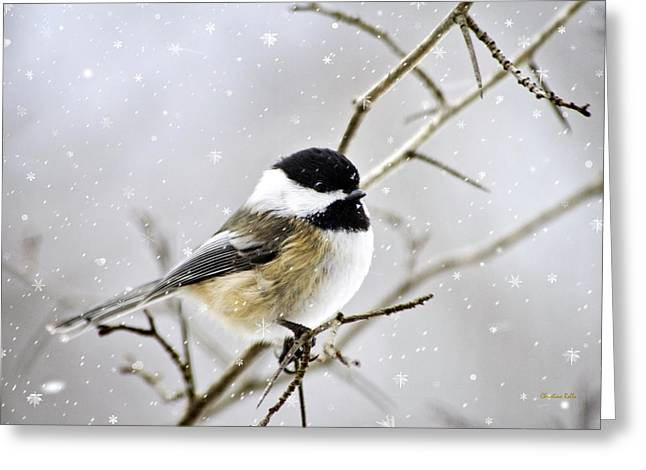 Christina Digital Art Greeting Cards - Snowy Chickadee Bird Greeting Card by Christina Rollo