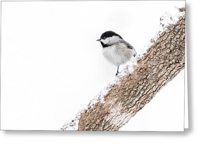Chickadee Greeting Cards Greeting Cards - Snowy Chickadee Greeting Card by Lori Coleman