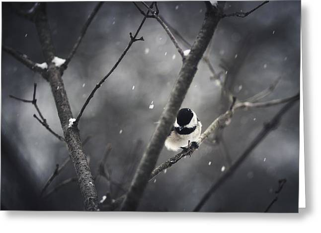 Chickadee Greeting Cards - Snowy Chickadee Greeting Card by Shane Holsclaw