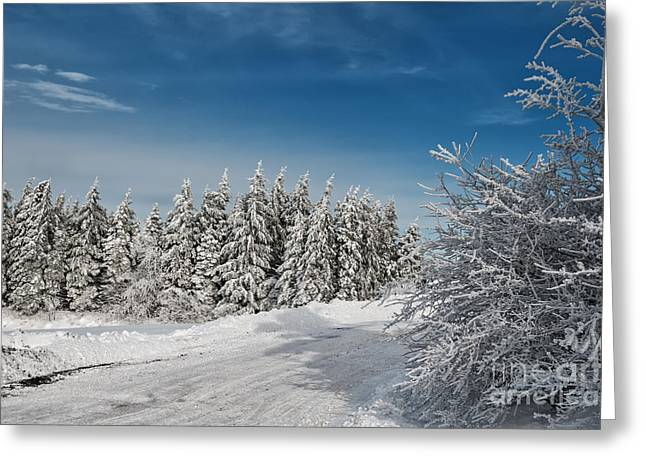 Snow-covered Landscape Photographs Greeting Cards - Snowy Country Lane Greeting Card by Lois Bryan