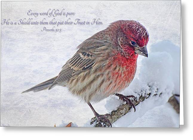 Bird Greetingcards Greeting Cards - Snowy Day Housefinch with verse  Greeting Card by Debbie Portwood