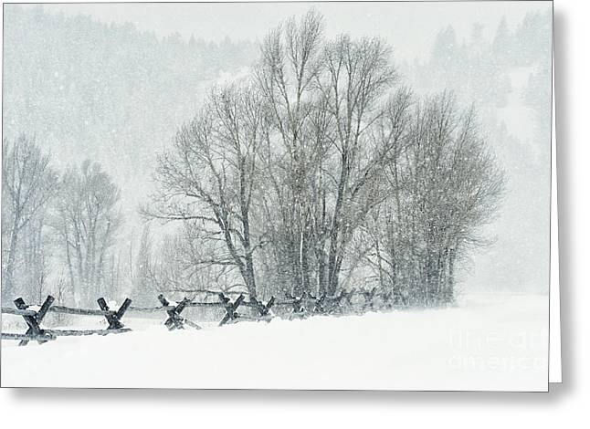 Snowstorm Greeting Cards - Snowy Day in the Tetons Greeting Card by Sandra Bronstein