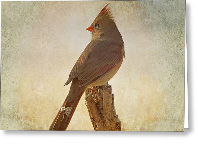 Cardinals In Snow Greeting Cards - Snowy Day Greeting Card by Sandy Keeton