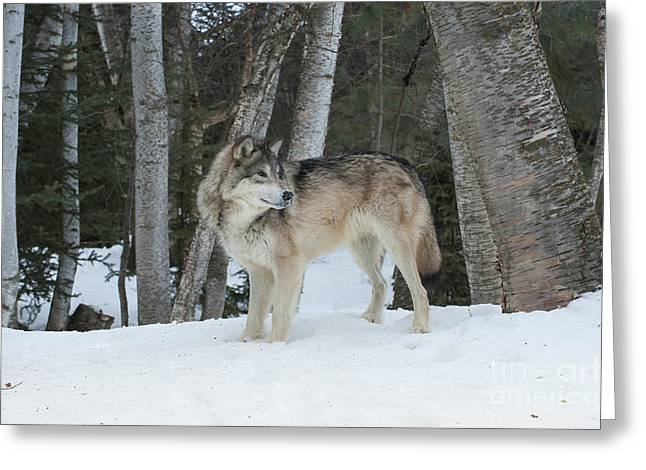 Controlled Environment Greeting Cards - Snowy Day Trek Greeting Card by Sandra Bronstein