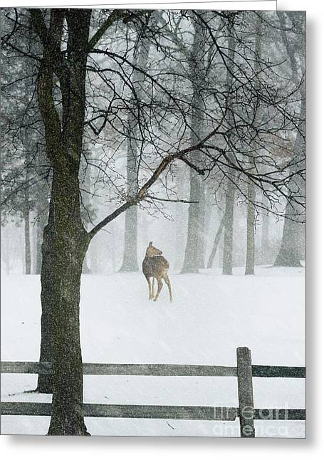 Snowy Deer Greeting Card by Margie Hurwich