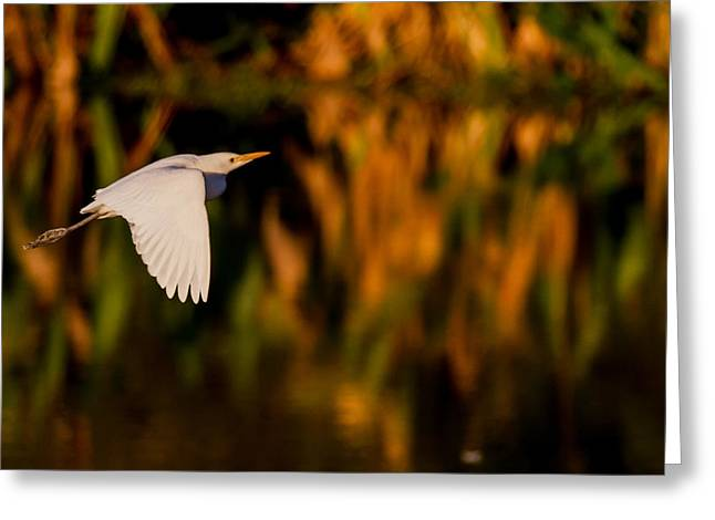 Snowy Egret Climbing Up To The Sky Greeting Card by Andres Leon