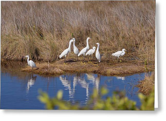 Snowie Greeting Cards - Snowy Egret Convention Greeting Card by John Bailey