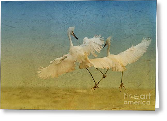 Snowy Egret Greeting Cards - Snowy Egret Dance Greeting Card by Deborah Benoit