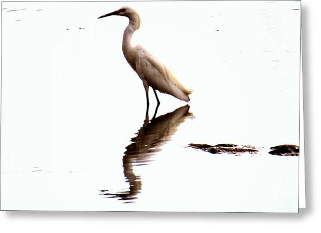 Snowy Egret Greeting Card by Emily  Froese