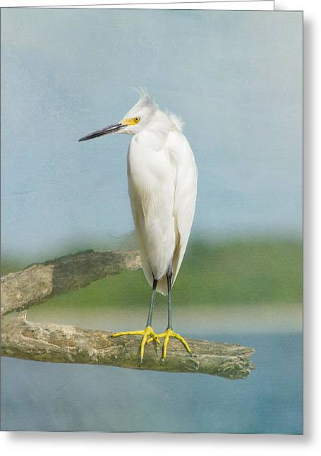 Kim Photographs Greeting Cards - Snowy Egret Greeting Card by Kim Hojnacki