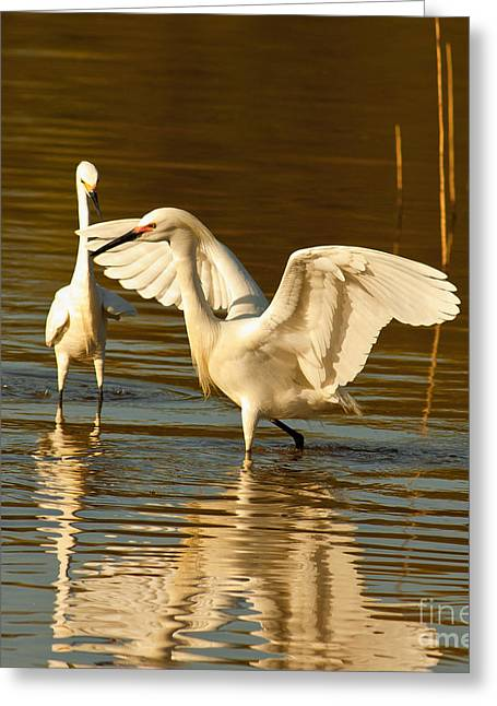 Snowy Egret Wingspan Greeting Card by Robert Frederick