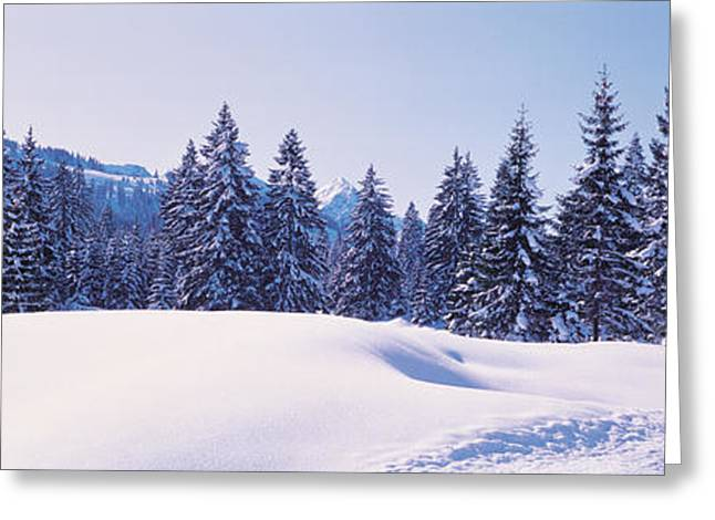 Snowy Day Greeting Cards - Snowy Field & Trees Oberjoch Germany Greeting Card by Panoramic Images