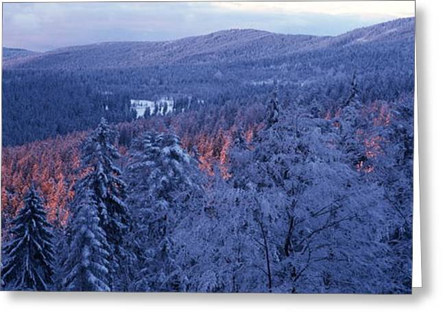 Outlook Greeting Cards - Snowy forests at sunset Greeting Card by Intensivelight