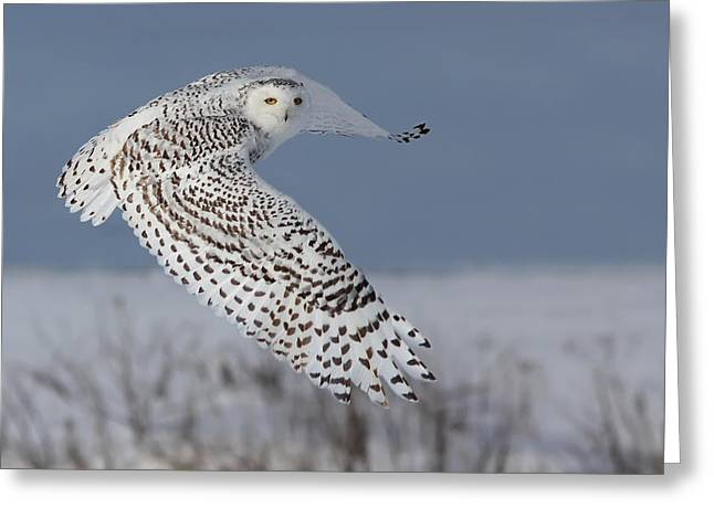 Mystic Art Greeting Cards - Snowy in action Greeting Card by Mircea Costina Photography