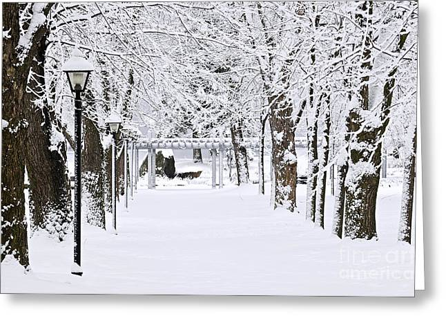 Snowy Tree Greeting Cards - Snowy lane in winter park Greeting Card by Elena Elisseeva